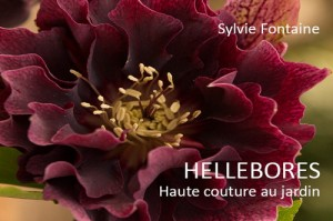 Couverture du Cd -livre numérique Hellébores Haute couture au jardin