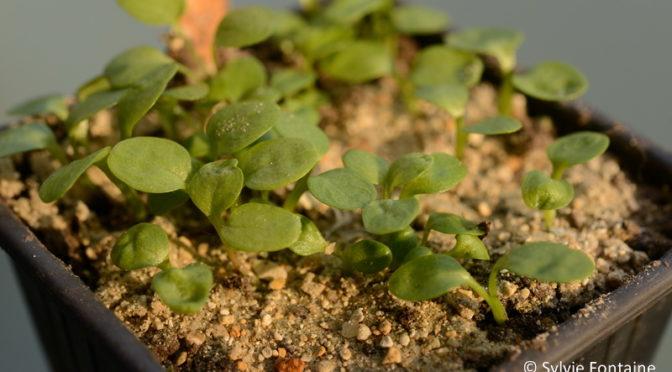 Humeur…petites graines