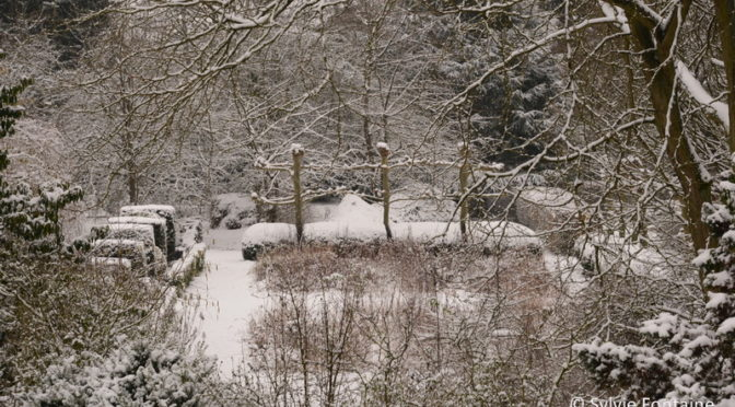 Vie de jardin…sous la neige