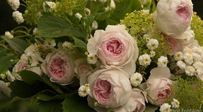 Les roses …quand c'est la saison!