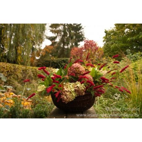 Cueillette de fleurs en automne au jardin de sylvie fontaine