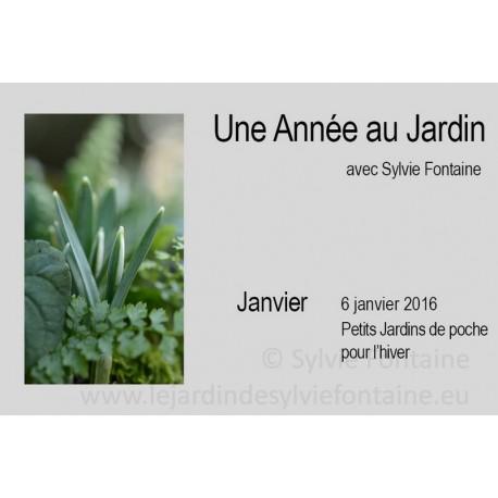 UNE ANNEE AU JARDIN  - 6 janvier PETITS JARDINS DE POCHE POUR L'HIVER