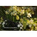 PLANTER LE PRINTEMPS  Jardiniéres et compositions en téléchargement