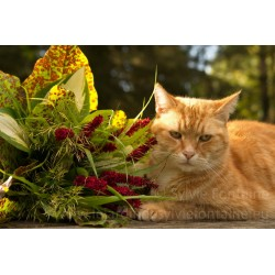 CHAT AU BOUQUET N°1