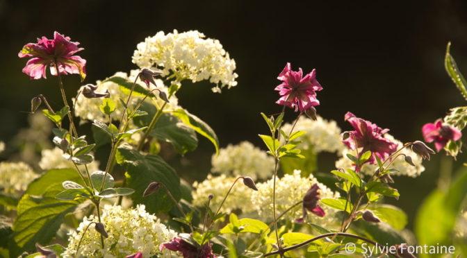 Lueurs botaniques